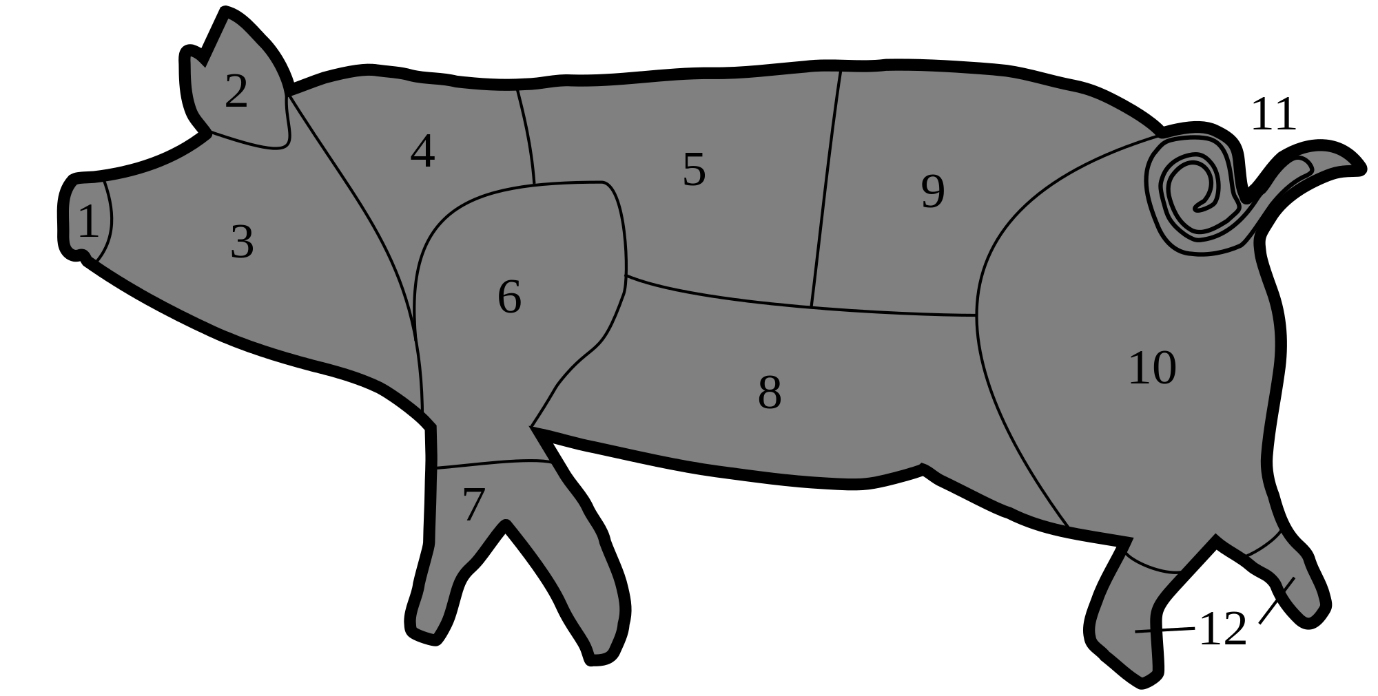 Pork drawing side view. Cut of wikipedia italian