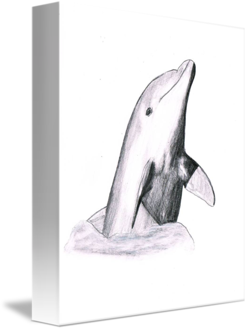 Porpoise drawing pink dolphin. Breaking the surface by