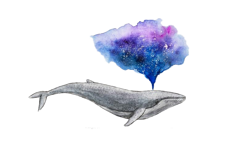 Porpoise drawing watercolor. Painting whale art water