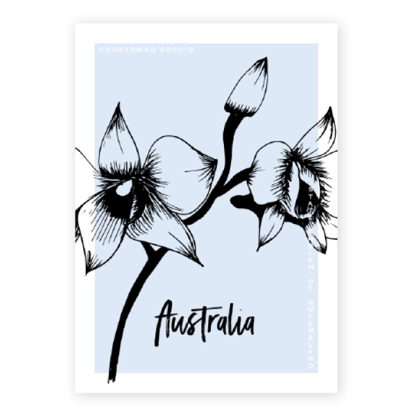 Postcard drawing. Native australia cooktown orchid