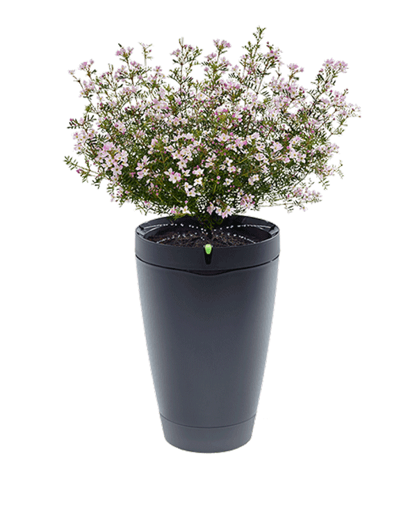 potted flower png