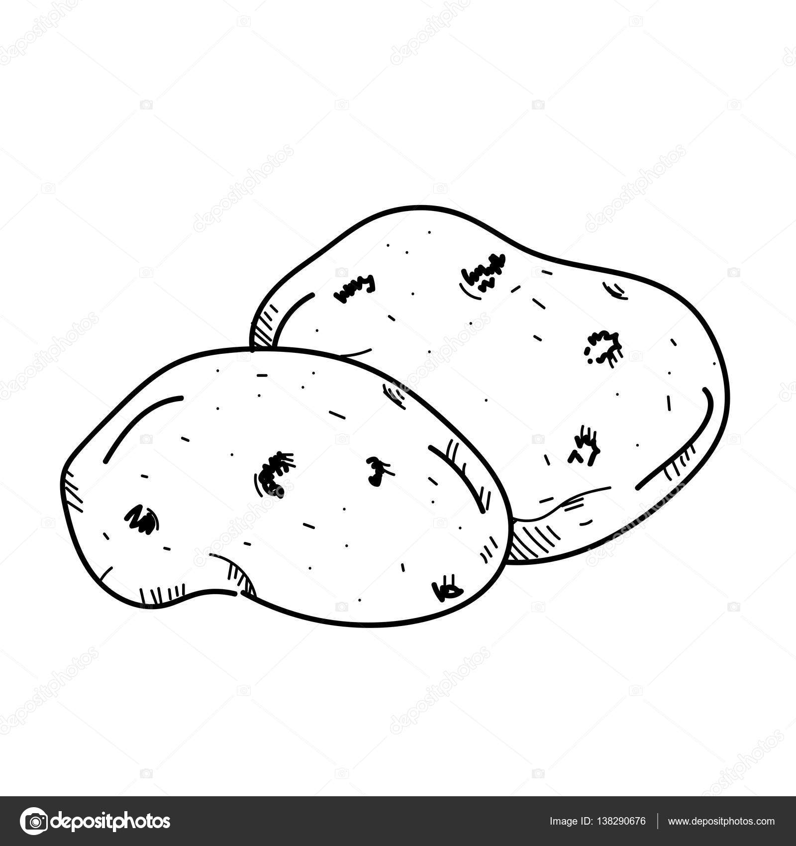 Potato clipart draw. Freehand drawing illustration vegetable
