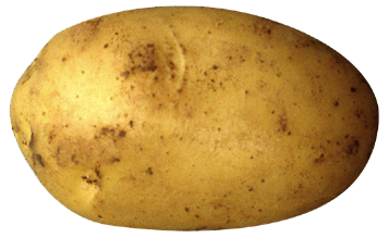 Clipart all. Potato png freeuse library