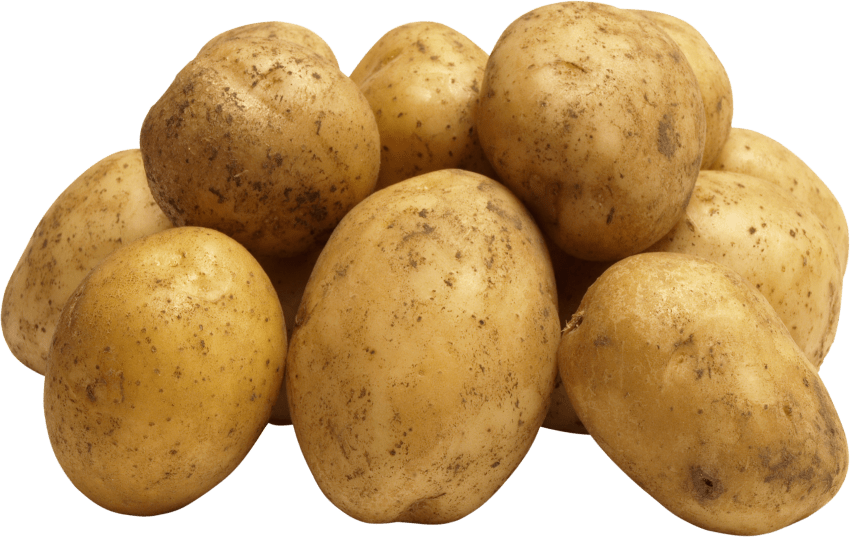 Free images toppng transparent. Potato png clip royalty free stock