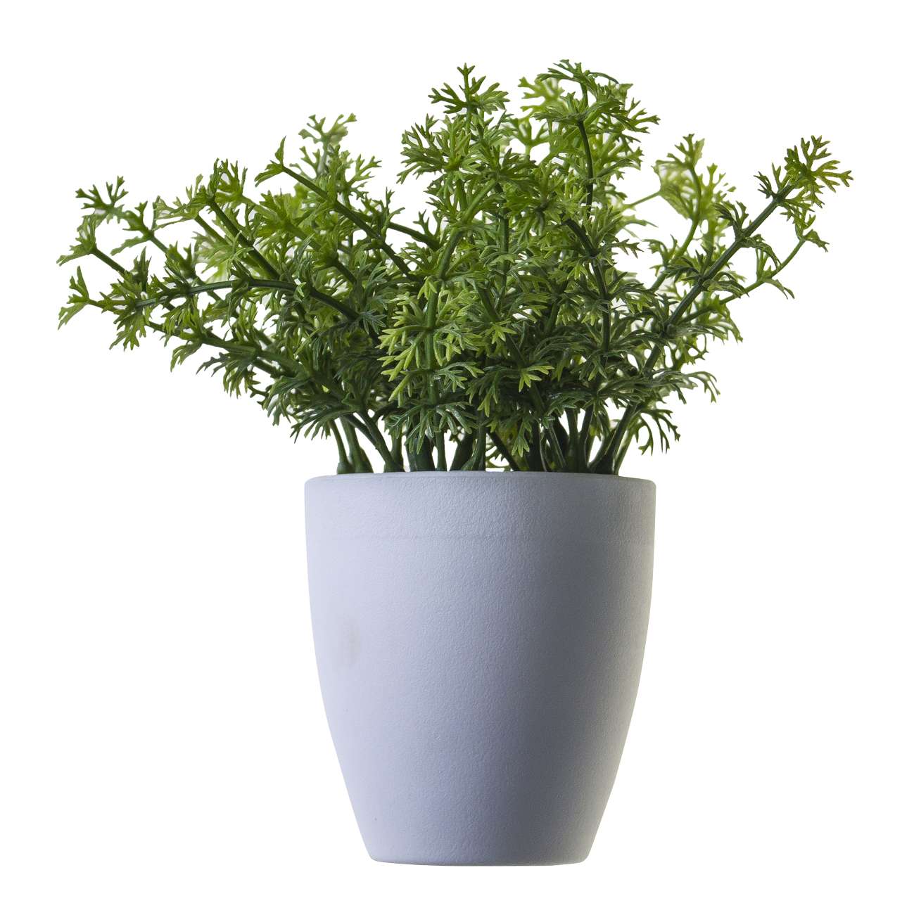 Green plants png. Plant image potted flower