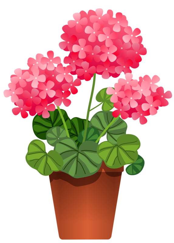 Potted flower png. Pinterest flowers and