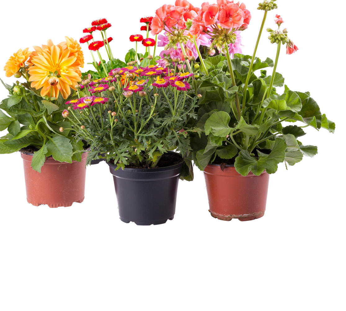 Potted flower png. Select your plants pots