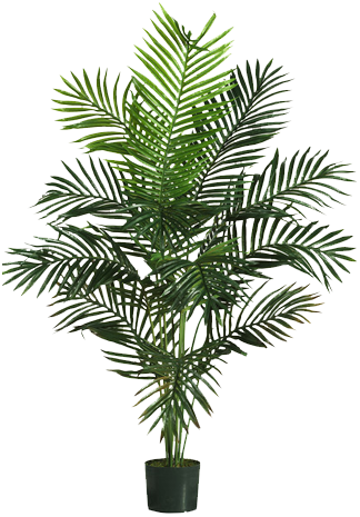 Potted palm tree png. In pot garden design