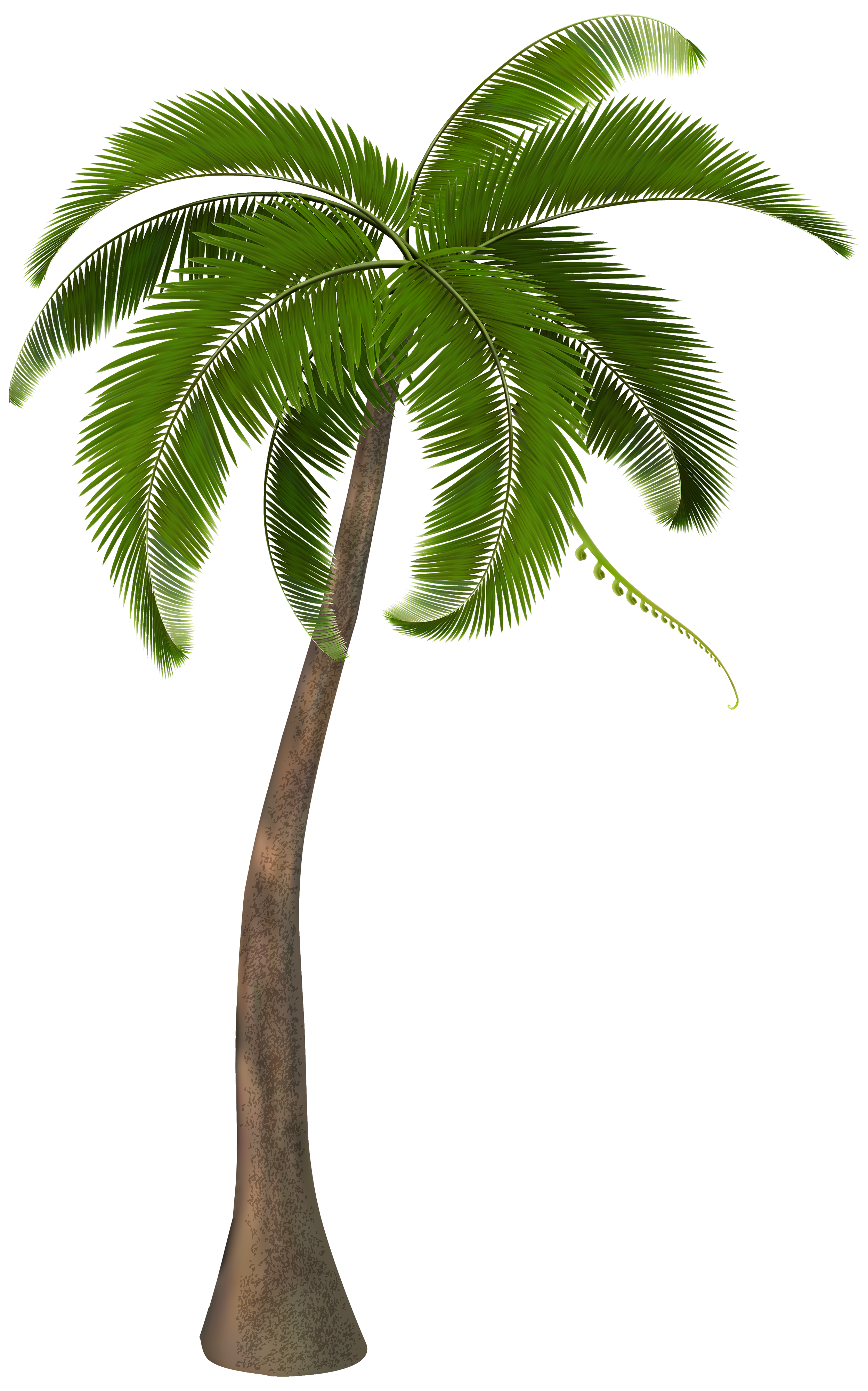 Potted palm tree png. Pin by gift on