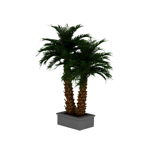 Potted palm tree png. Date arecaceae d computer