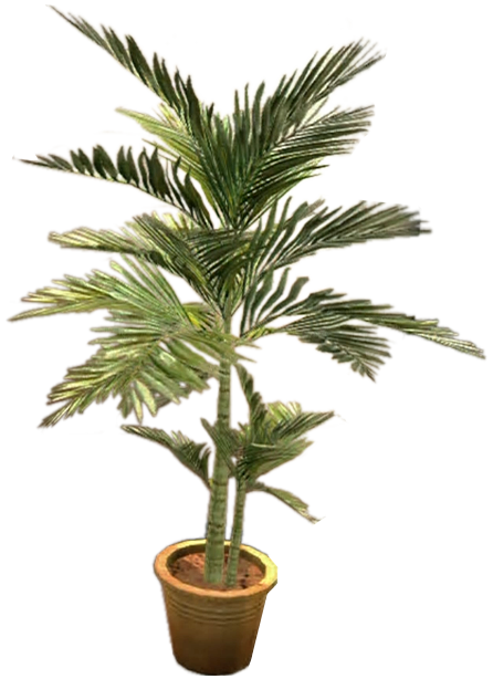 Potted plants png. Image dead rising plant