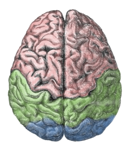 Power clipart genius brain. Revolvy lateralization of function
