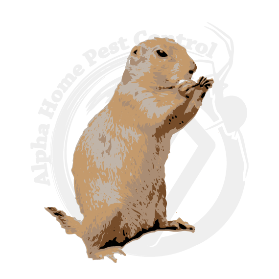 Prairie dog open mouth png hind legs. Blog alpha home pest