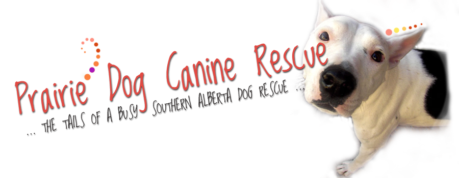Prairie dog open mouth png hind legs. Canine rescue bannerpng