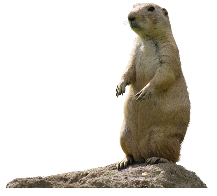 Prairie dog open mouth png hind legs. Dogs bold visions conservation