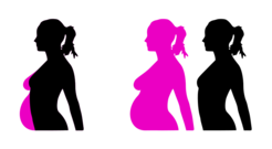 Pregnancy clipart. Free pregnant and vector