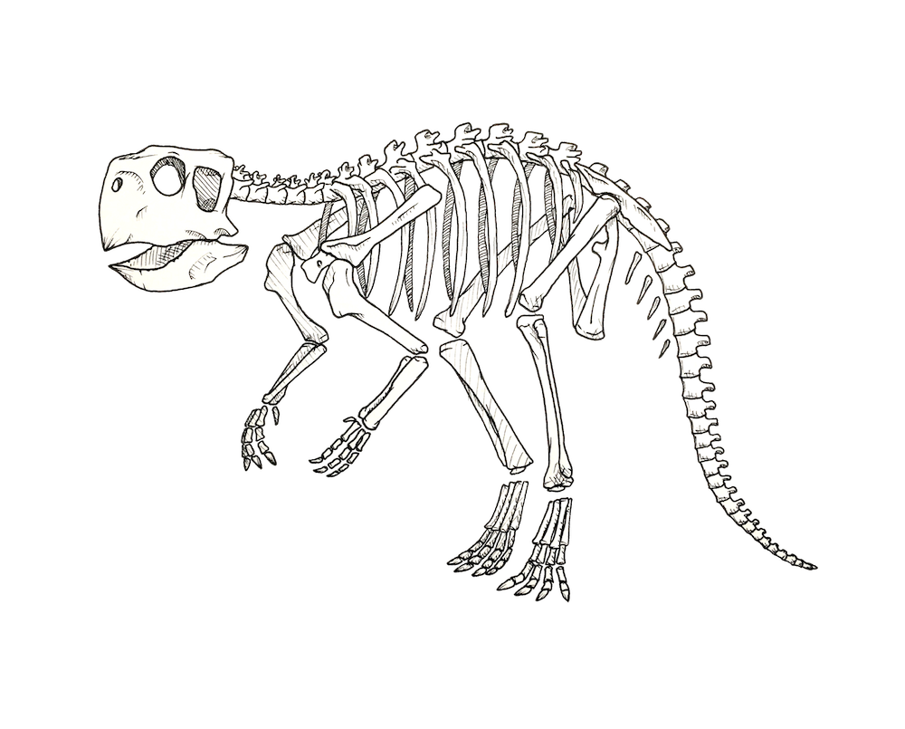 Prehistoric drawing. X ray dinosaurs and