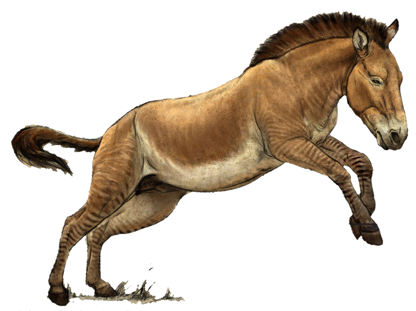 Prehistoric drawing horse. Hagerman sticker by andrea