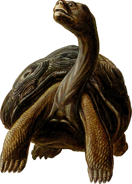 Prehistoric drawing turtle. With long neck clip