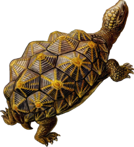 Prehistoric drawing turtle. Walking clip art at