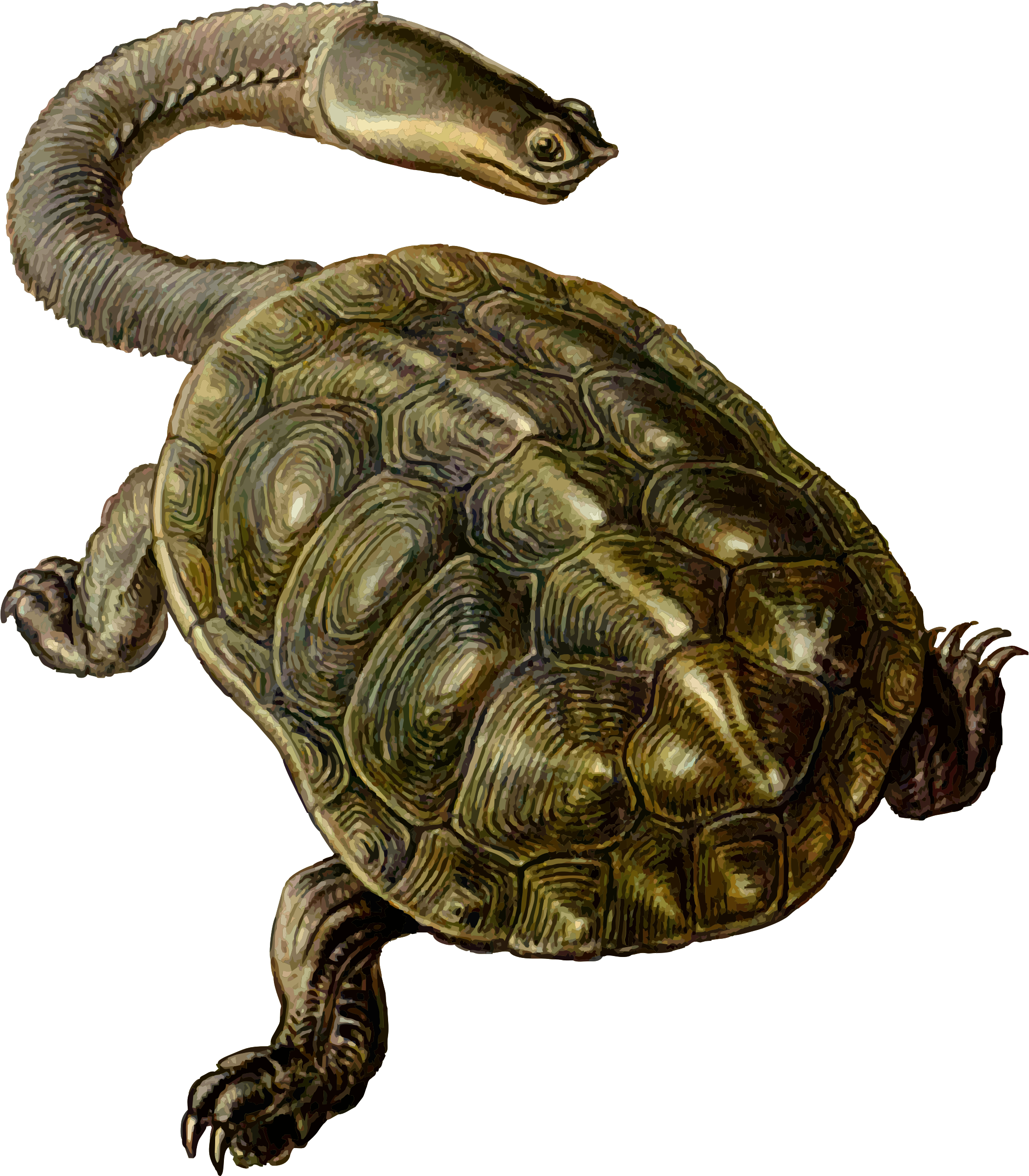 Prehistoric drawing turtle. Icons png free and