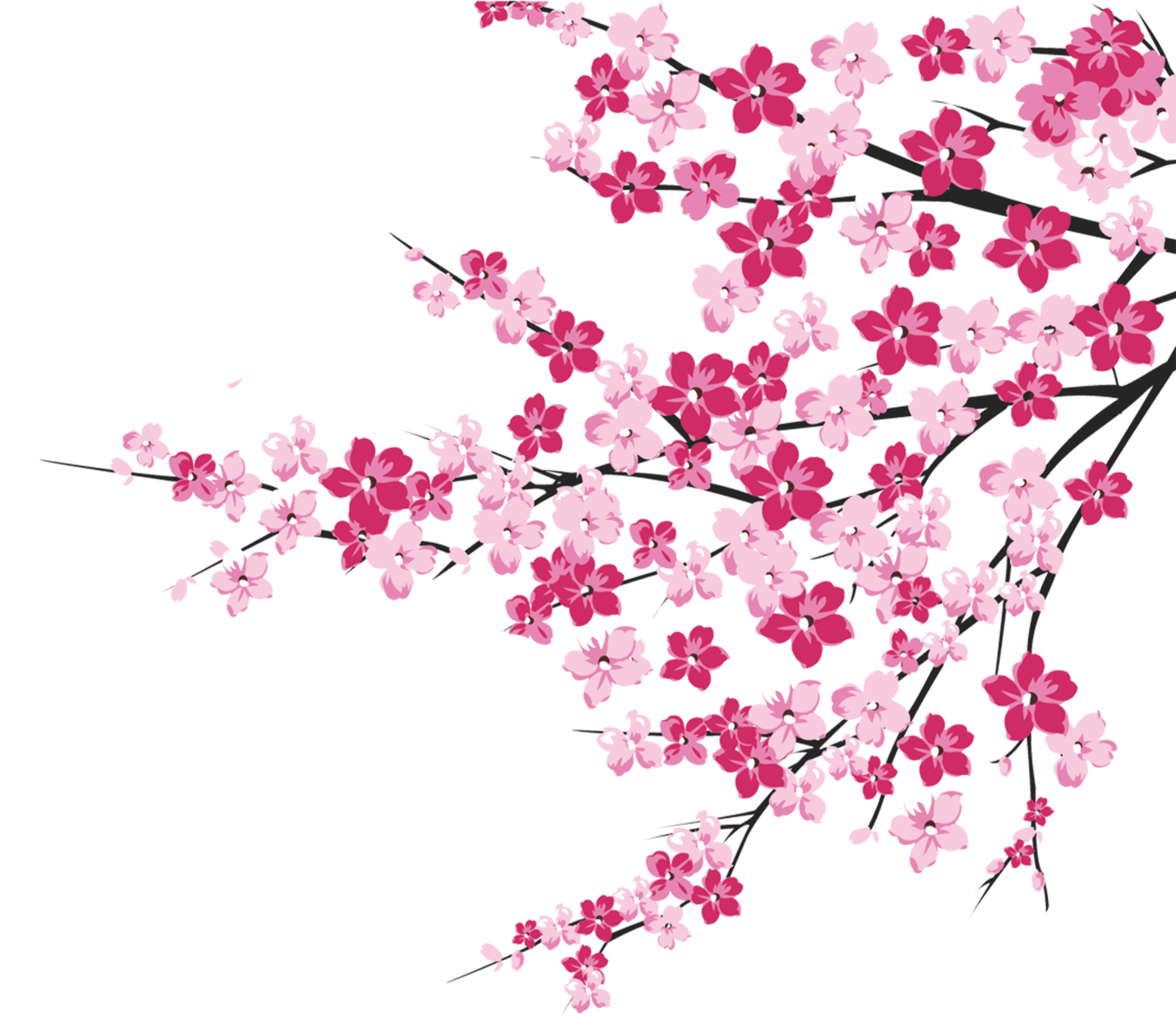 Pretty clipart cherry blossom tree. Download branch cliparts for