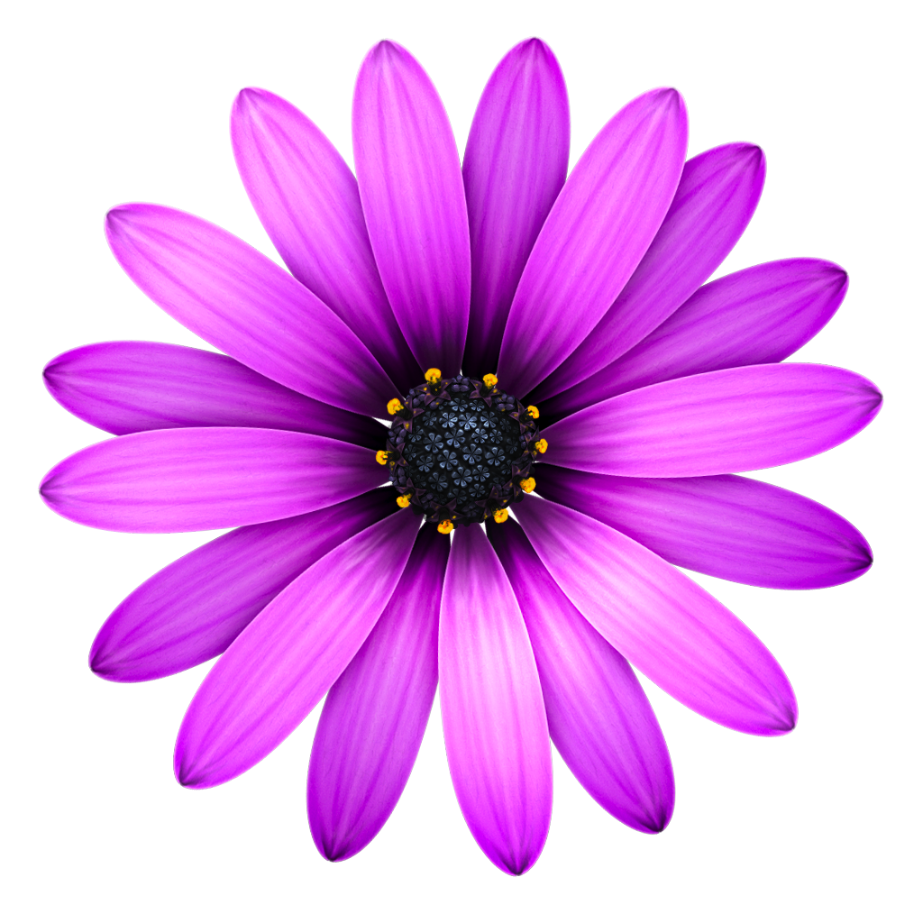 Pretty flowers png. Icons vector free and