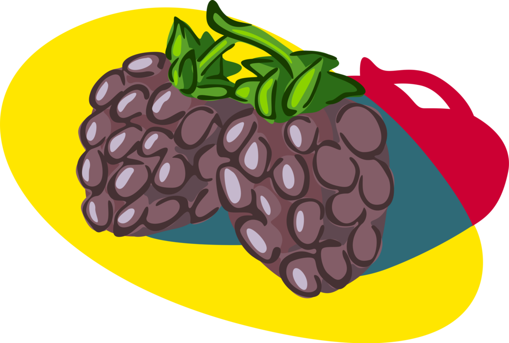 Produce vector illustration. Blackberry fruit image of