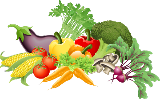Vector vegetables fresh vegetable. Graphic design fruit and
