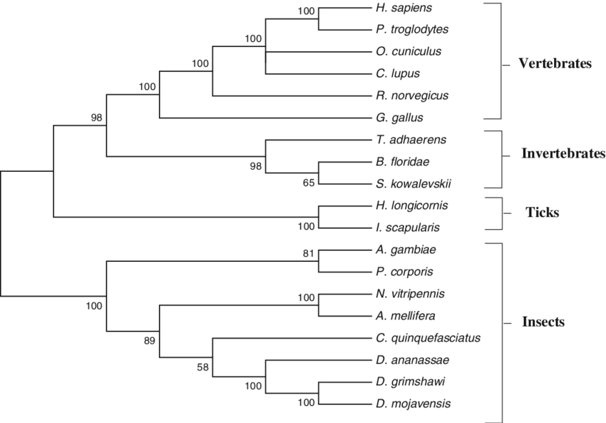 Prset vector. Phylogenetic tree of the