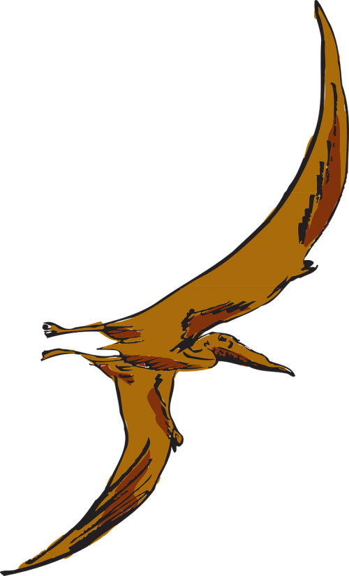 Pterodactyl transparent flying. Free photos search download