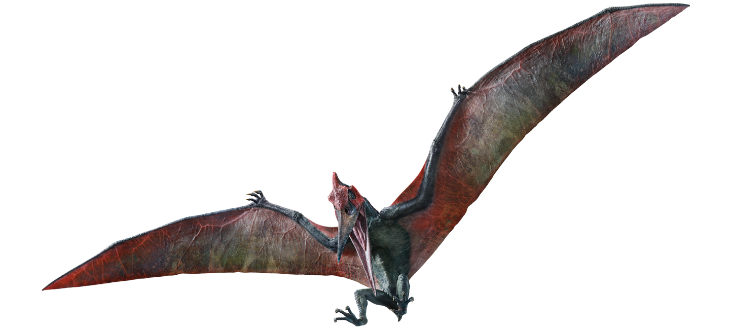Pterodactyl transparent pteranodon. Jurassic world