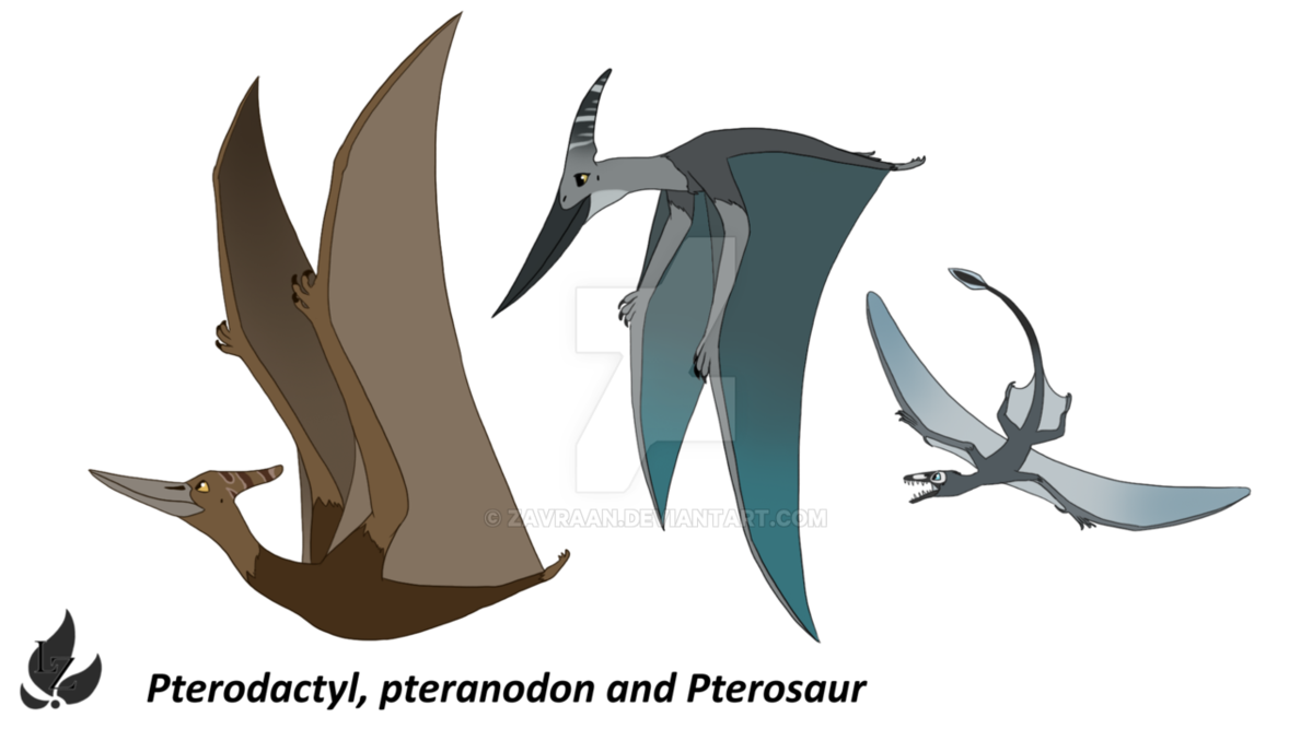 Pterodactyl transparent pteranodon. And pterosaur design by