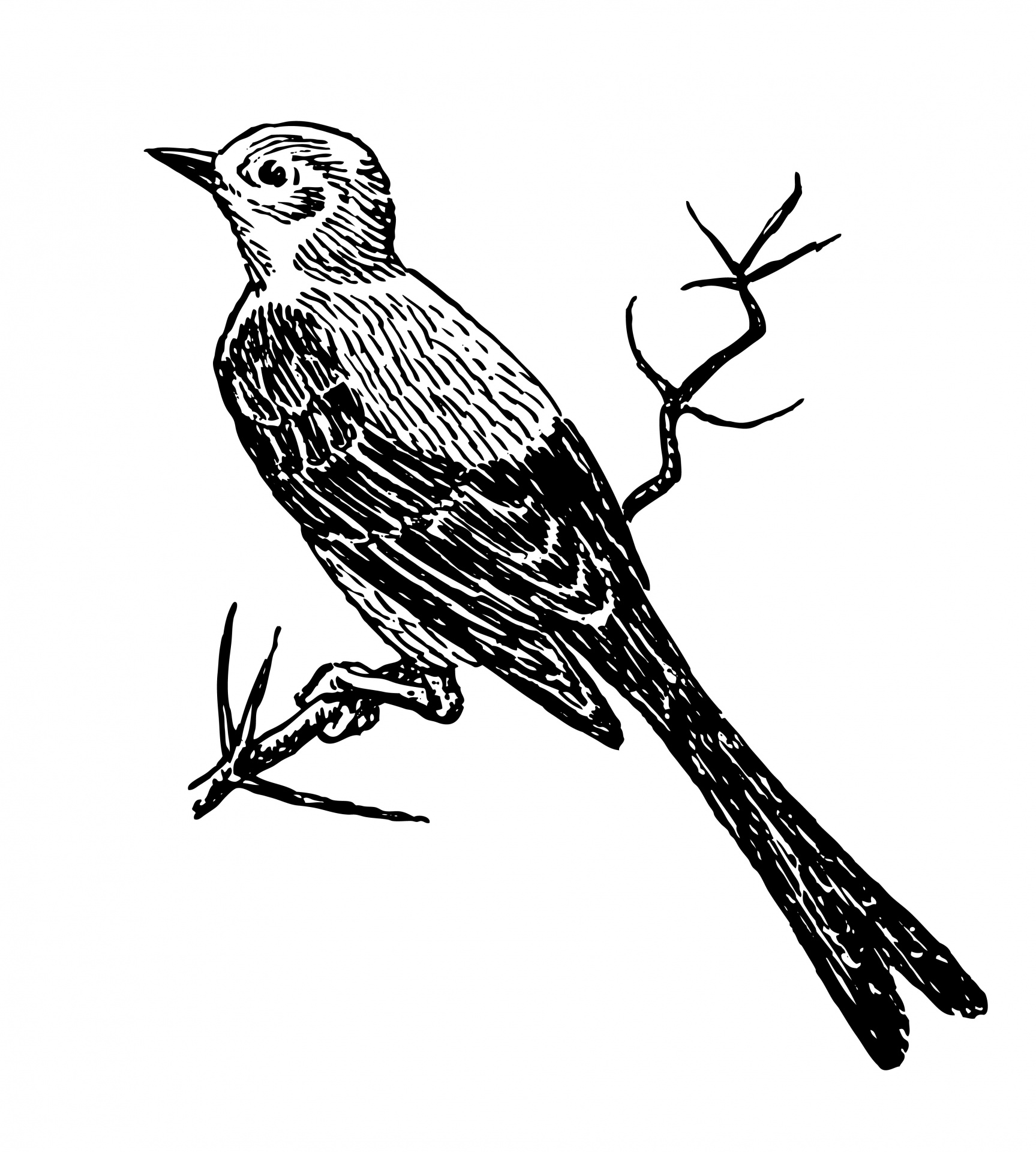 Public domain clipart bird. Illustration free stock photo