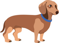 Free dog clip art. Dachshund clipart dpg picture stock