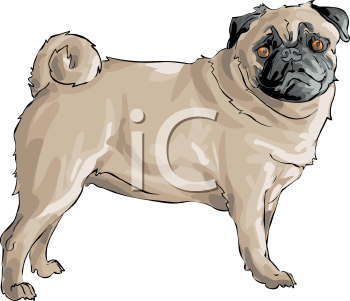 Pug clipart pencil. Face and in color