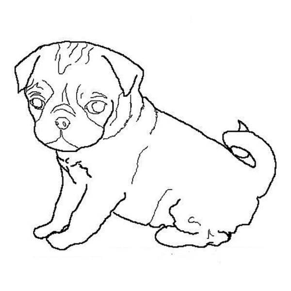 Pug clipart pencil. Drawn outline and in