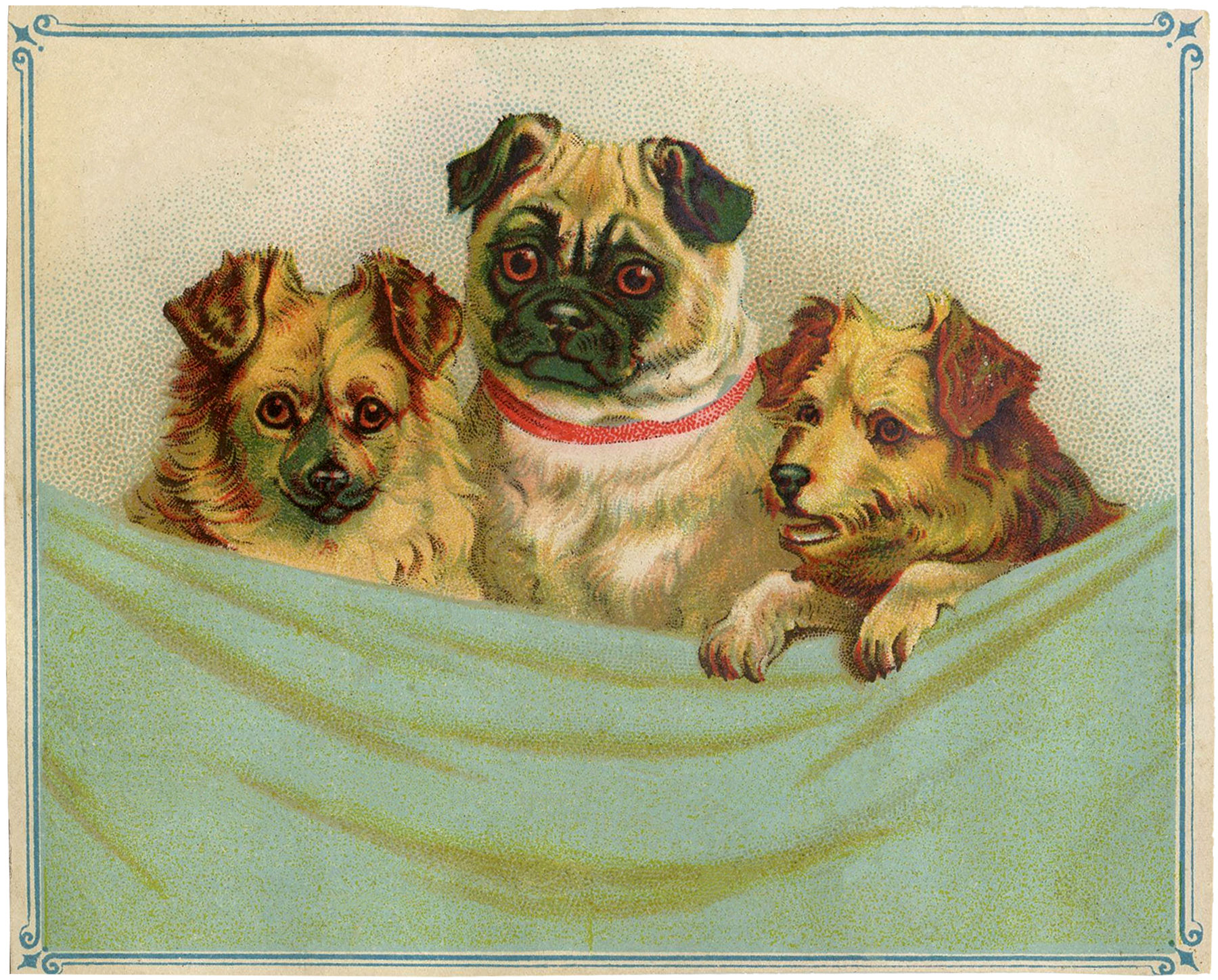 Pug clipart public domain. Dogs and cats archives