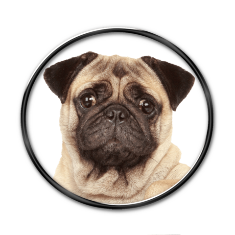 Pug face png. Kissable nail decals now