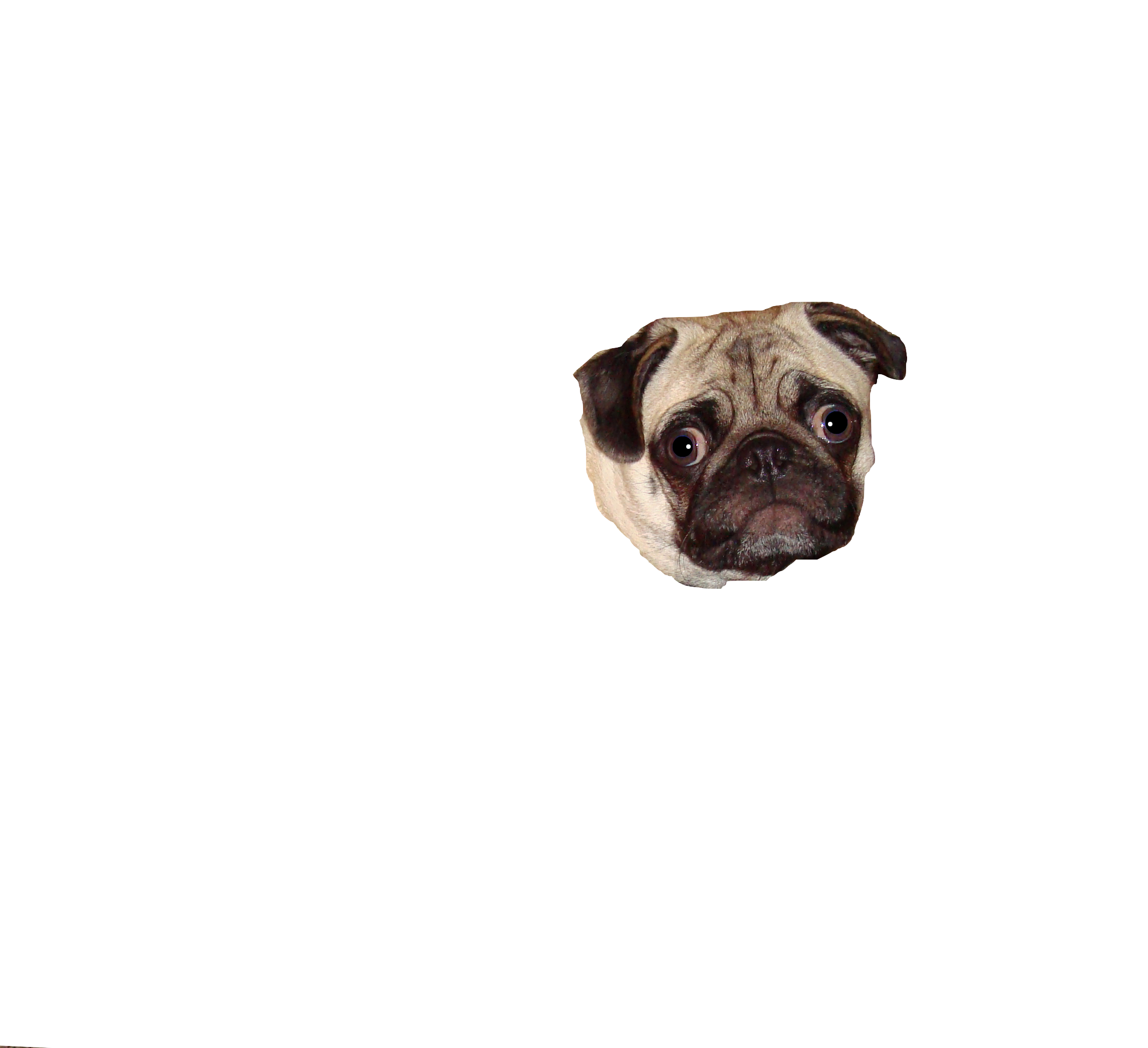 Pug face png. Start off with a