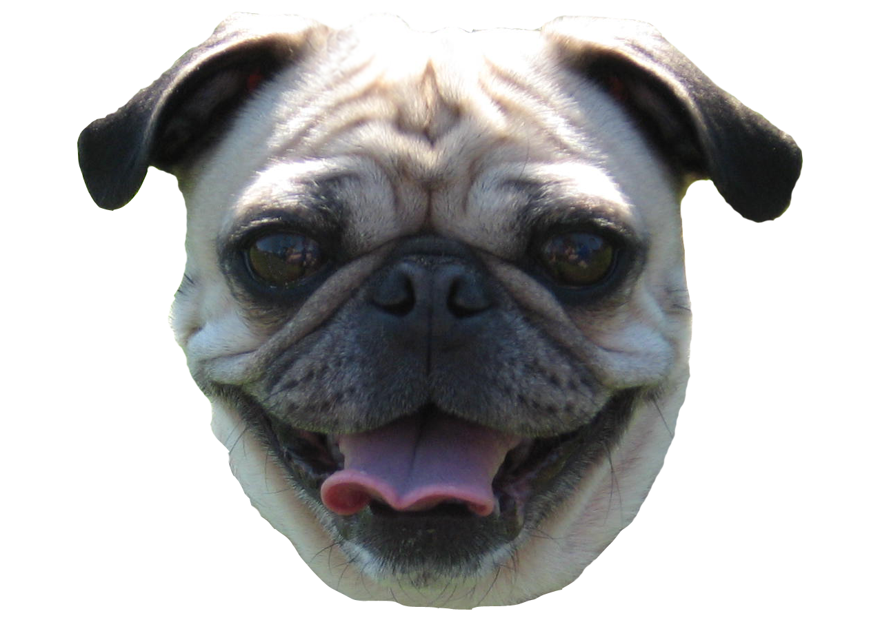 Pug head png. Behind the scenes how