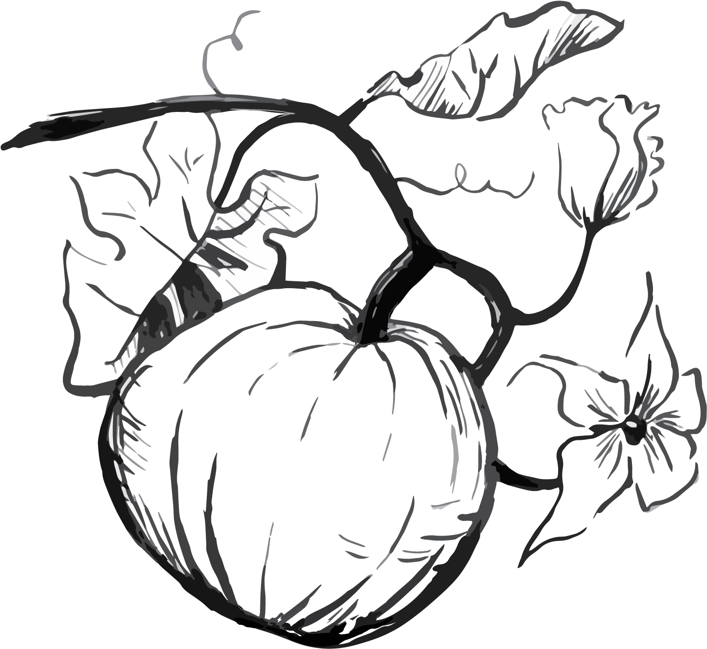 Bay drawing black and white. Download half moon pumpkin