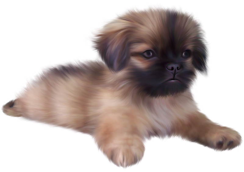 Puppy png. Painted cute clipart gallery