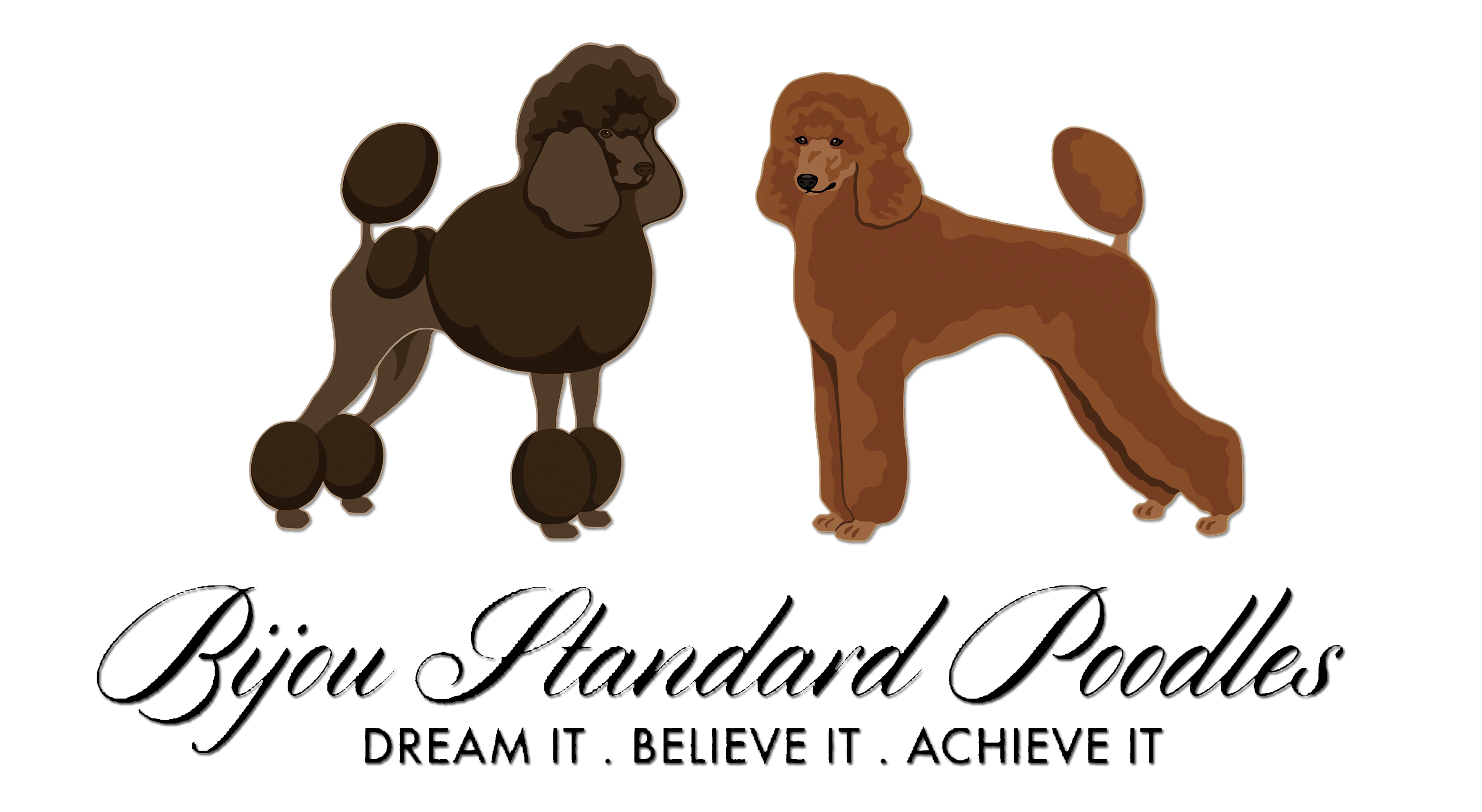 Puppy clip miniature poodle. About us and our