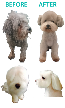 Certified dog groomer new. Poodle clip cut svg transparent stock