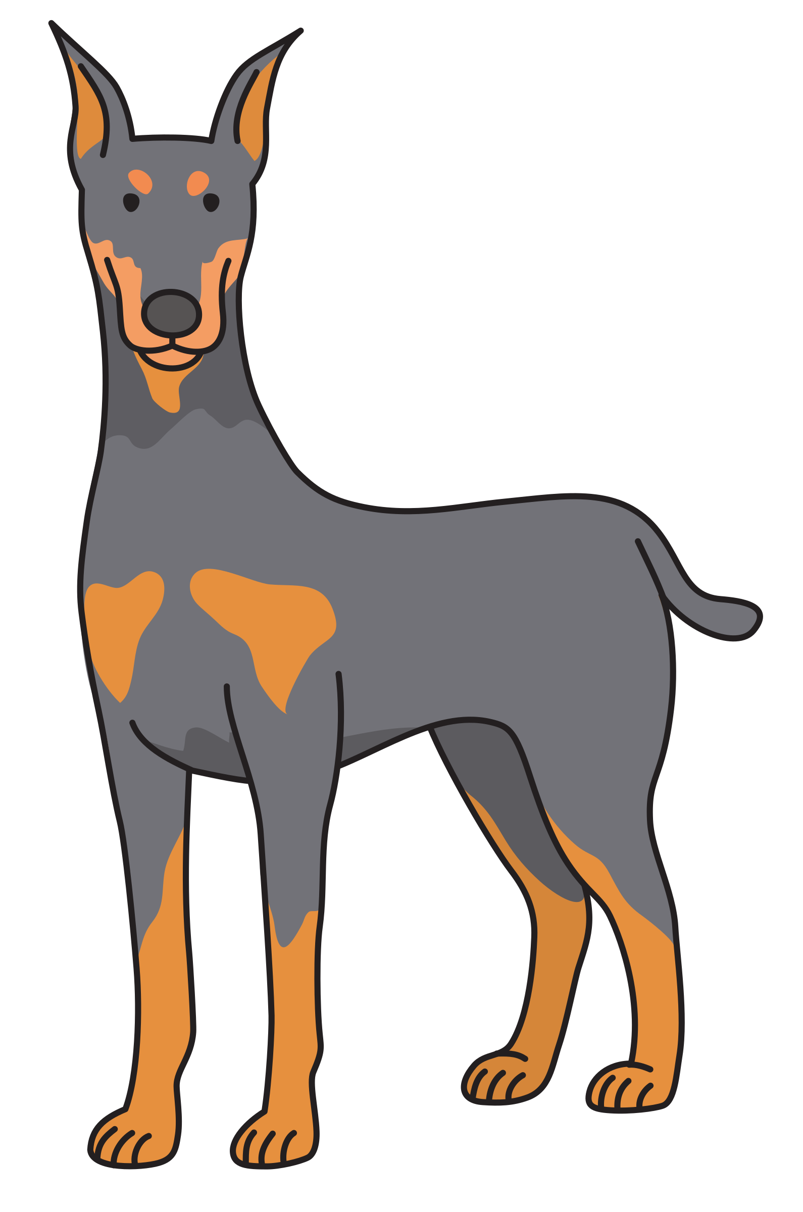 Doberman vector clip art. Dobermann puppy dog transprent