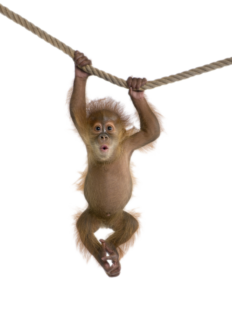 By captainjackharkness on deviantart. Monkey png png