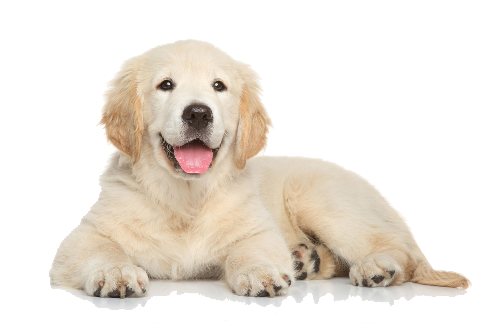 Puppy png. Images transparent free download