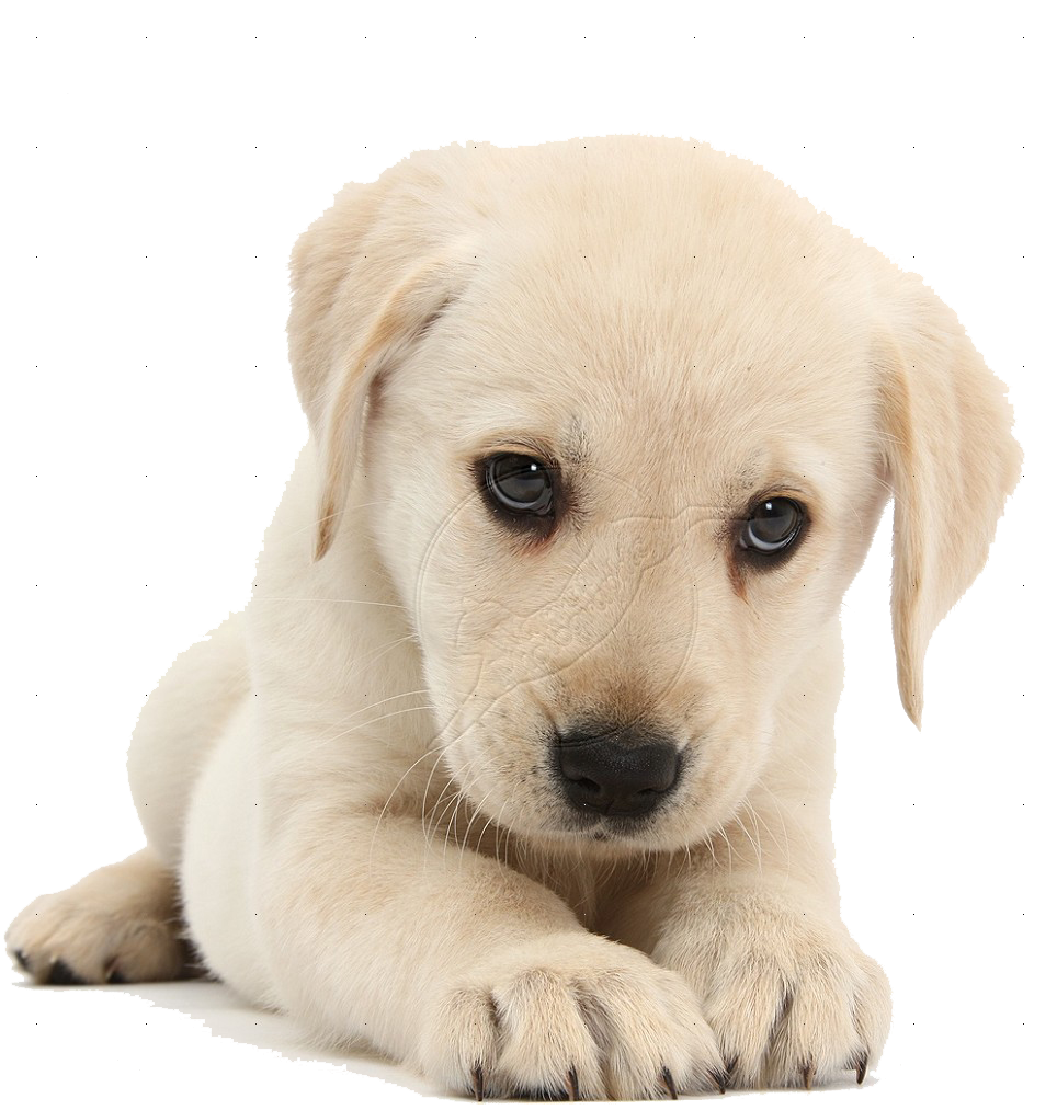 Hd transparent images pluspng. Puppy png banner freeuse library