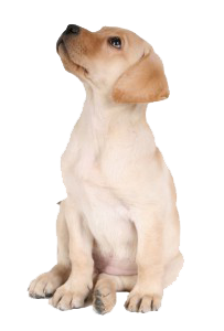 Talking the minute dog. Puppy png jpg black and white